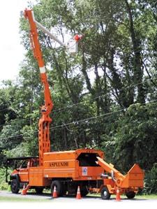 Crew member trimming trees