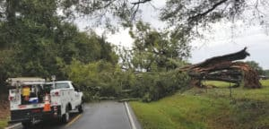 York Electric truck with downed tree blocking road