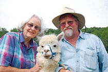 Dan Lawing and his wife, Linda, with one of their alpacas, Dakota, at their farm, Amazing Alpacas Stoney Meadow Farm.