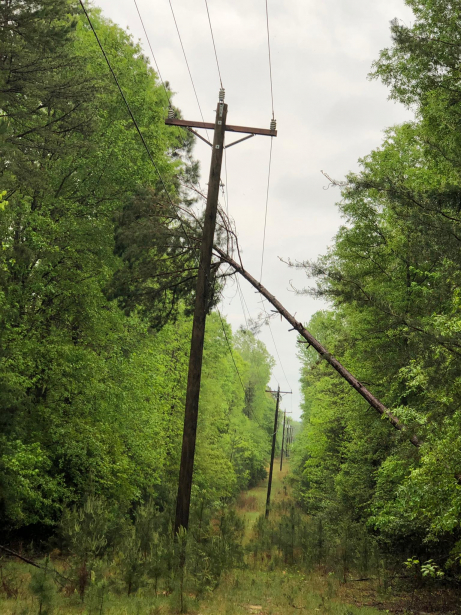 Tall pine tree leaning at an angle on power lines
